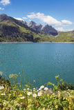 Pictorial artificial lake lunersee with alpine flowers Royalty Free Stock Photos