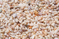 Pictorial background with shells and snails on the beach. The unique, pictorial, impressive and natural background with fossils of shells and snails on the beach Royalty Free Stock Image