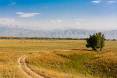 Pictorial field on a background of mountains Royalty Free Stock Images