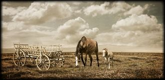 Pictorial landscape. With horse and wooden chariot Royalty Free Stock Images