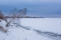 Pictorial landscape bank of frozen river with crooked growing birch in winter royalty free stock image