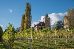 Pictorial vineyard and castle salenegg, maienfeld Royalty Free Stock Photo