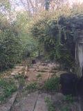 Abandoned Garden royalty free stock photo