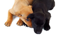 Picture from above of two stray puppy dogs Stock Photo