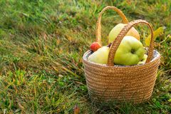 Picture with apples. Royalty Free Stock Photo