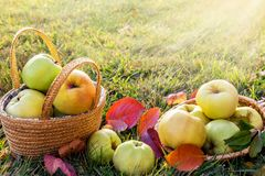 Picture with apples. Royalty Free Stock Photos