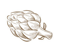 Picture of artichoke Royalty Free Stock Photo
