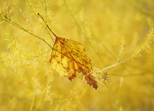 Picture of autumn Stock Images