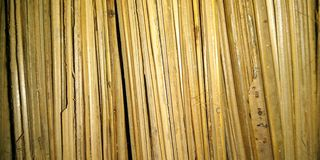 A picture of Bambusa broom background ,. A picture of Bambusa broom background A picture of Bambusa broom background stock photos