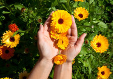Picture of beautiful flowers in womans hands Stock Photos