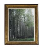 A picture of a birch grove in a vintage frame. Vintage silver rectangular frame with an ornament isolated on white. stock image