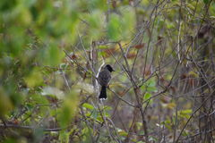 Picture of bird sitting on branch. Royalty Free Stock Photography