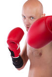 Picture of bold boxer Stock Image