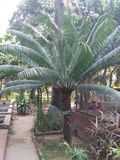 This picture is boldha garden in dhaka, Bangladesh. royalty free stock image