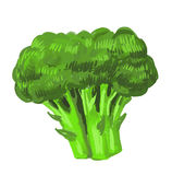Picture of broccoli Royalty Free Stock Photos