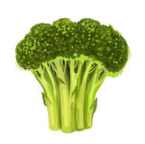 Picture of broccoli Royalty Free Stock Image
