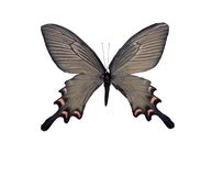 Picture of Butterfly Stock Photography