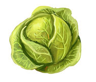 Picture of cabbage Stock Images