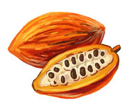 Picture of cacao Royalty Free Stock Images