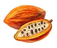 Une nouvelle fleur en plein questionnement - Page 5 Picture-cacao-vector-paint-hand-drawn-53748639