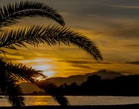 A sunset in a Cambrils beach. Palm tree vision. royalty free stock image