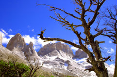 Picture captured in Patagonia (Argentina) Royalty Free Stock Images