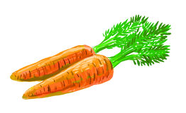 Picture of carrot Royalty Free Stock Photography