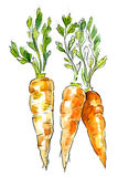 Picture of carrot Royalty Free Stock Photos