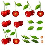 Cherry isolated on white with clipping path. royalty free stock image
