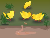 Picture of chicks and worm garden. Picture of chicks and worm for an inspiration or special needs Stock Photo