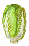 Picture of Chinese Cabbage Royalty Free Stock Photo
