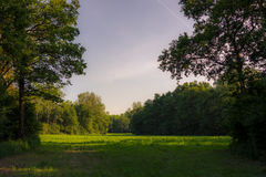 Picture of a clearing in a forest with trees at the sides and sk Royalty Free Stock Photography