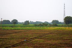 Agricultural field which is having growing crops stock photography