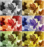 Picture of colorful leaves. Leaves themes in various colors, six blocks Stock Photos