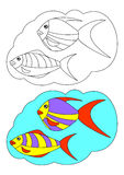 The picture for coloring. Fish. The picture for coloring. Contour of fish and painted fish on a white background Royalty Free Stock Image