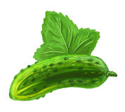Picture of cucumber Stock Photography