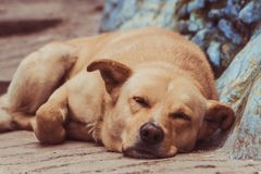 Cute dog sleeping on the street stock photography