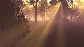 3D graphics. picture. sunrise in the forest. the sun's rays break through the leaves stock photo