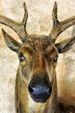 Deer head sculpture. A picture of a deer head sculpture at a market royalty free stock image