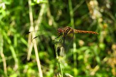 Picture of a dragonfly pretty close royalty free stock images