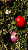 Easter eggs on grass. Picture of easter eggs on grass. Sunny day blue sky Royalty Free Stock Image
