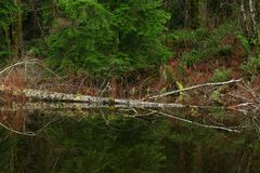 Pacific Northwest forest lake. A picture of an exterior Pacific Northwest forest lake royalty free stock photography
