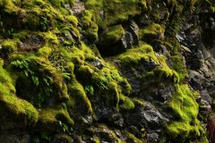 Pacific Northwest forest and mossy Granite rock wall. A picture of an exterior Pacific Northwest forest with mossy Granite rock wall stock photography