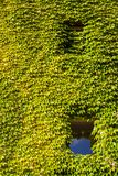Facade of a vine-clad farm building Royalty Free Stock Photos