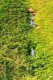 Facade of a vine-clad farm building Royalty Free Stock Photos