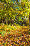 Picture of fall Royalty Free Stock Image
