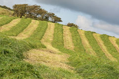 Picture of farm field with newly cut grass. And tree Royalty Free Stock Photography