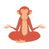 Picture fiery monkey. Monkey in the lotus in the new year 2016. Fire Monkey peace and tranquility Stock Image