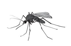 Picture figure mosquito ink Royalty Free Stock Image
