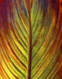 Picture of a flower's leaf texture Royalty Free Stock Photos